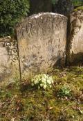 Churchyard Primroses